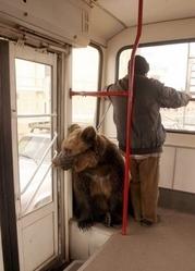 Ремонт окон Киев,  регулировка дверей,  диагностика и срочный ремонт